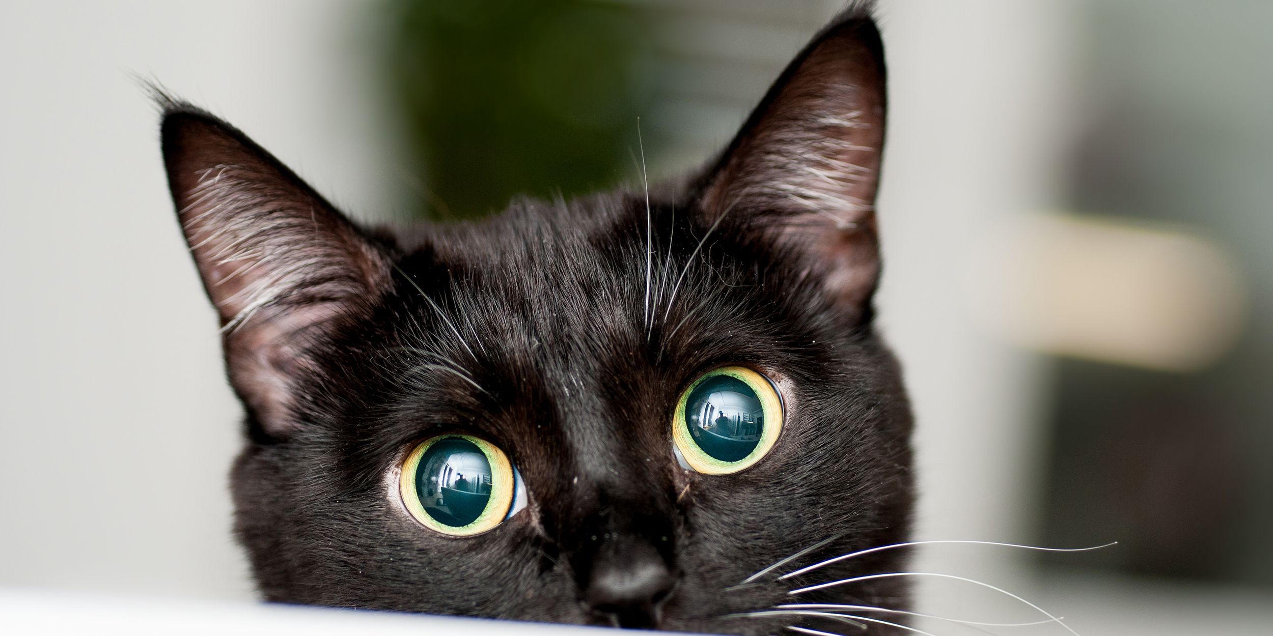 27 Cute Black Cat Names Good Names For Male And Female Black Cats