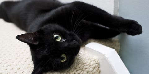 27 Cute Black Cat Names - Good Names for Male and Female ...