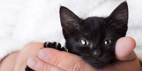 black cat names - food inspired cat names