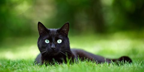 60 Black Cat Names Good Names For Male And Female Black Cats