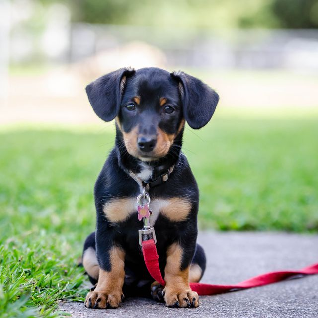 18 Best Mixed-Breed Dogs - Cutest Breed Dog Mixes