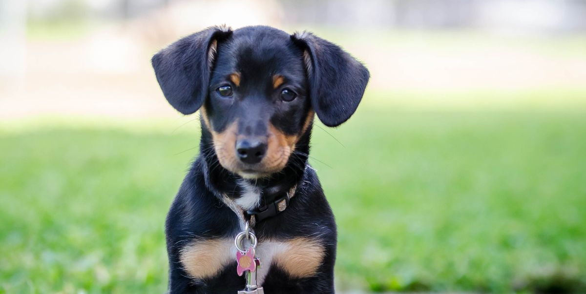 18 Adorable Mixed Breed Dogs You'll Fall in Love With