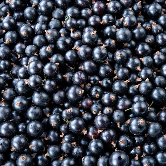 blackcurrant good for muscle recovery