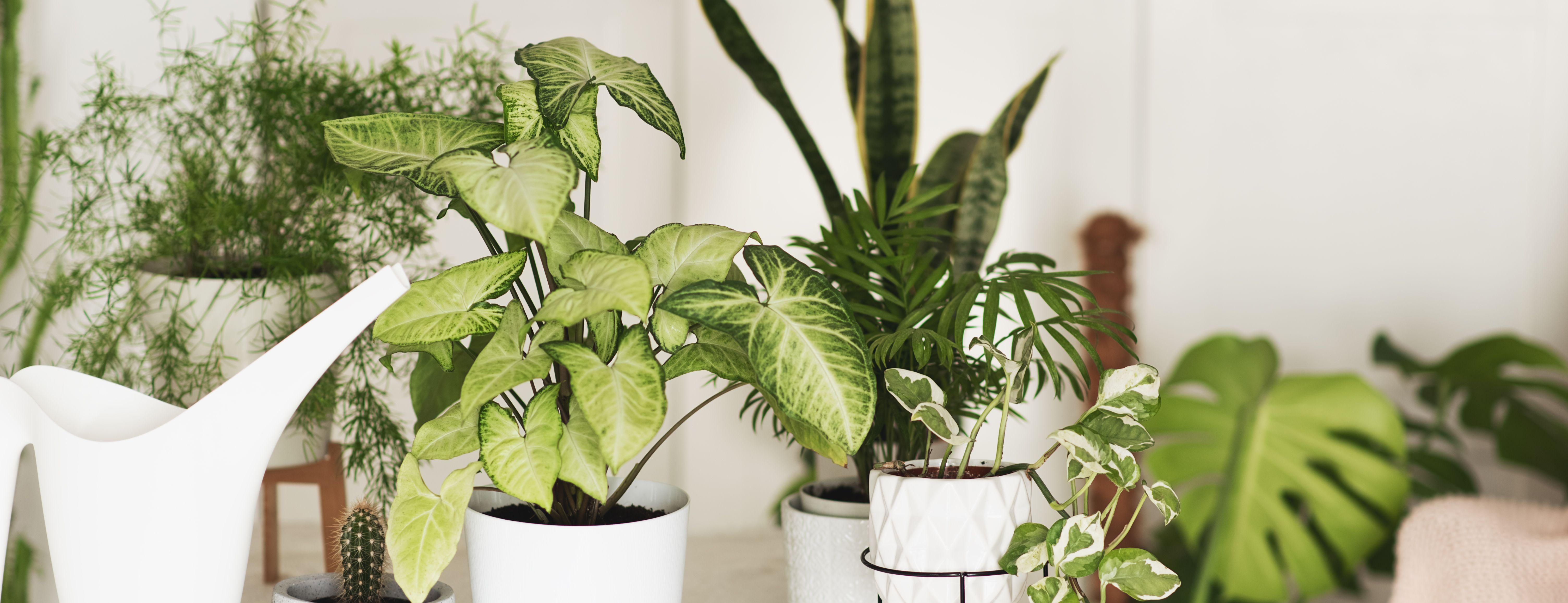 Gardening pro James Wong reveals impressive DIY indoor water feature using an IKEA table