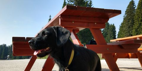 Black dog under the table outdoors.