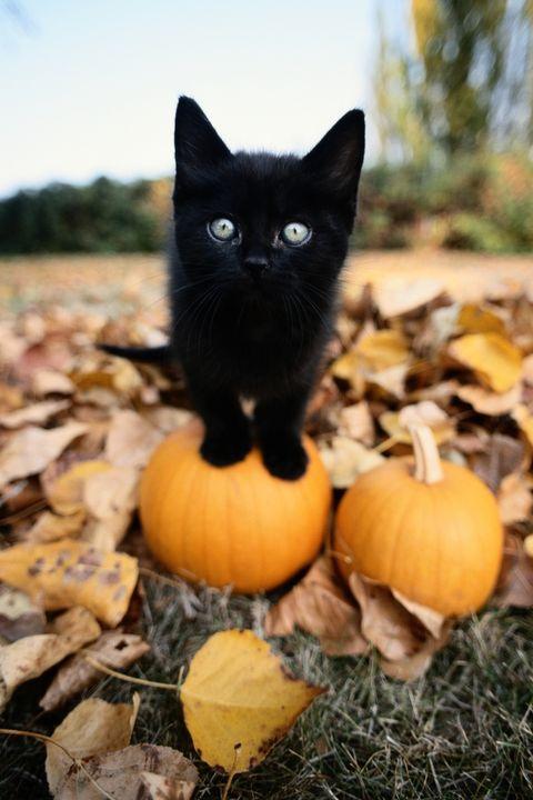 halloween themed black cat names
