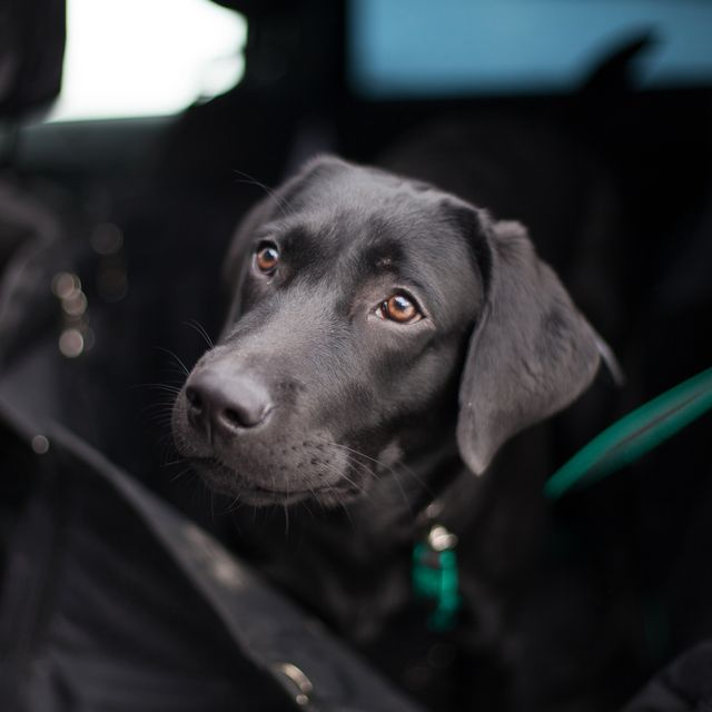 tesco staff to patrol car parks looking for dogs locked in hot cars