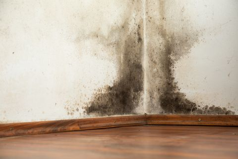 Black Mold Removal - Natural Ways to