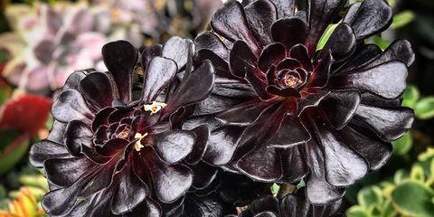 Flower, Plant, Petal, Flowering plant, Botany, Wildflower, Annual plant,
