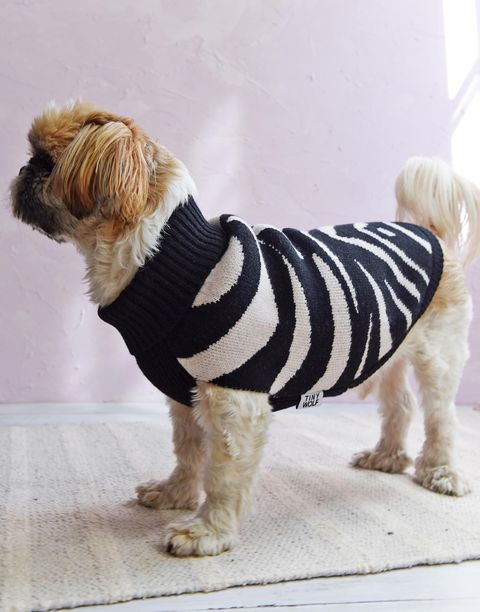 Dog clothes, Dog, Dog breed, Canidae, Companion dog, Carnivore, Petit basset griffon vendéen, Dog supply, Fur, Rare breed (dog),