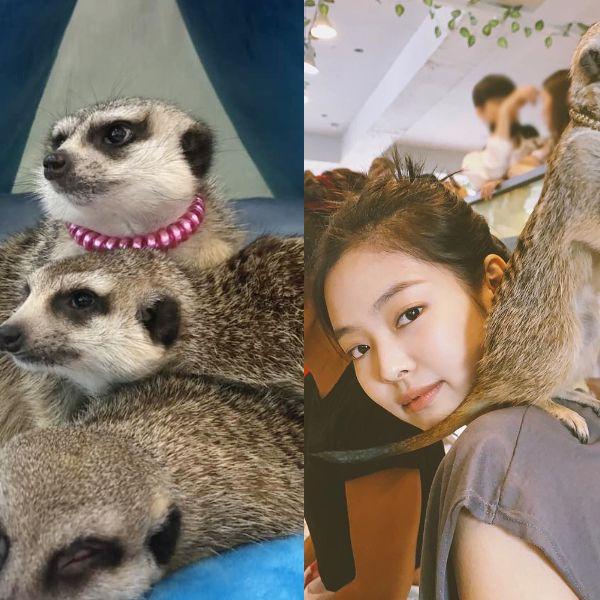 跟隨Blackpink Jennie一窺首爾狐獴主題咖啡廳!還有浣熊、袋鼠陪你度過悠閒午後時光