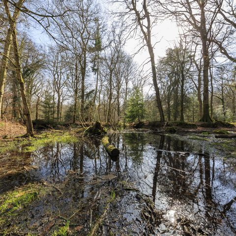 Blackwater at New Forest National Park