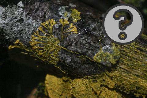 Yellow, Water, Organism, Leaf, Eye, Rock, Geology, Tree, Plant, Photography,