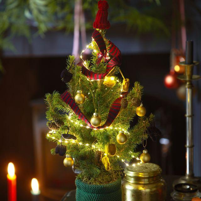 bloom  wild christmas tree