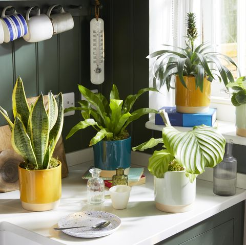 bloom  wild launches new range of large houseplants to suit every environment