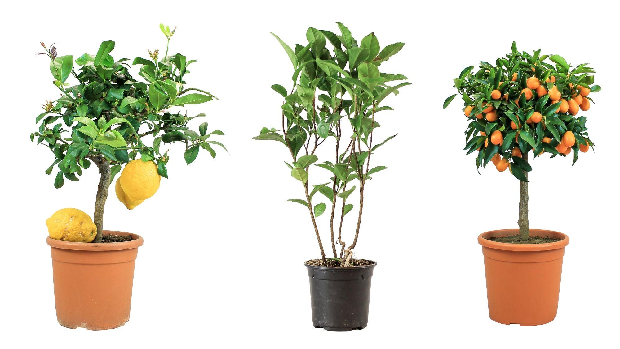 Bloombox Club launches new range of garden plants