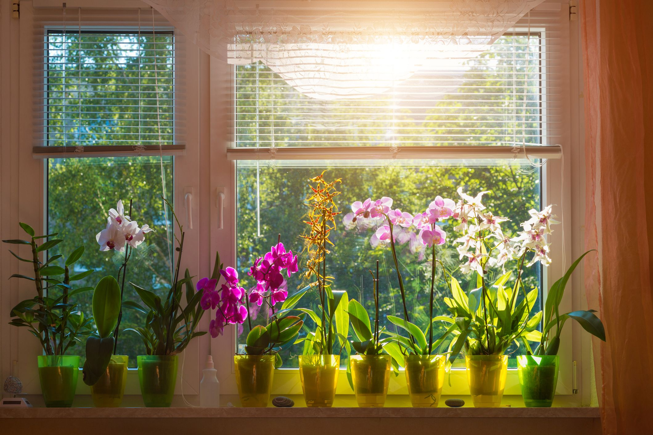 13 Indoor Blooming Plants That Are Easy To Maintain