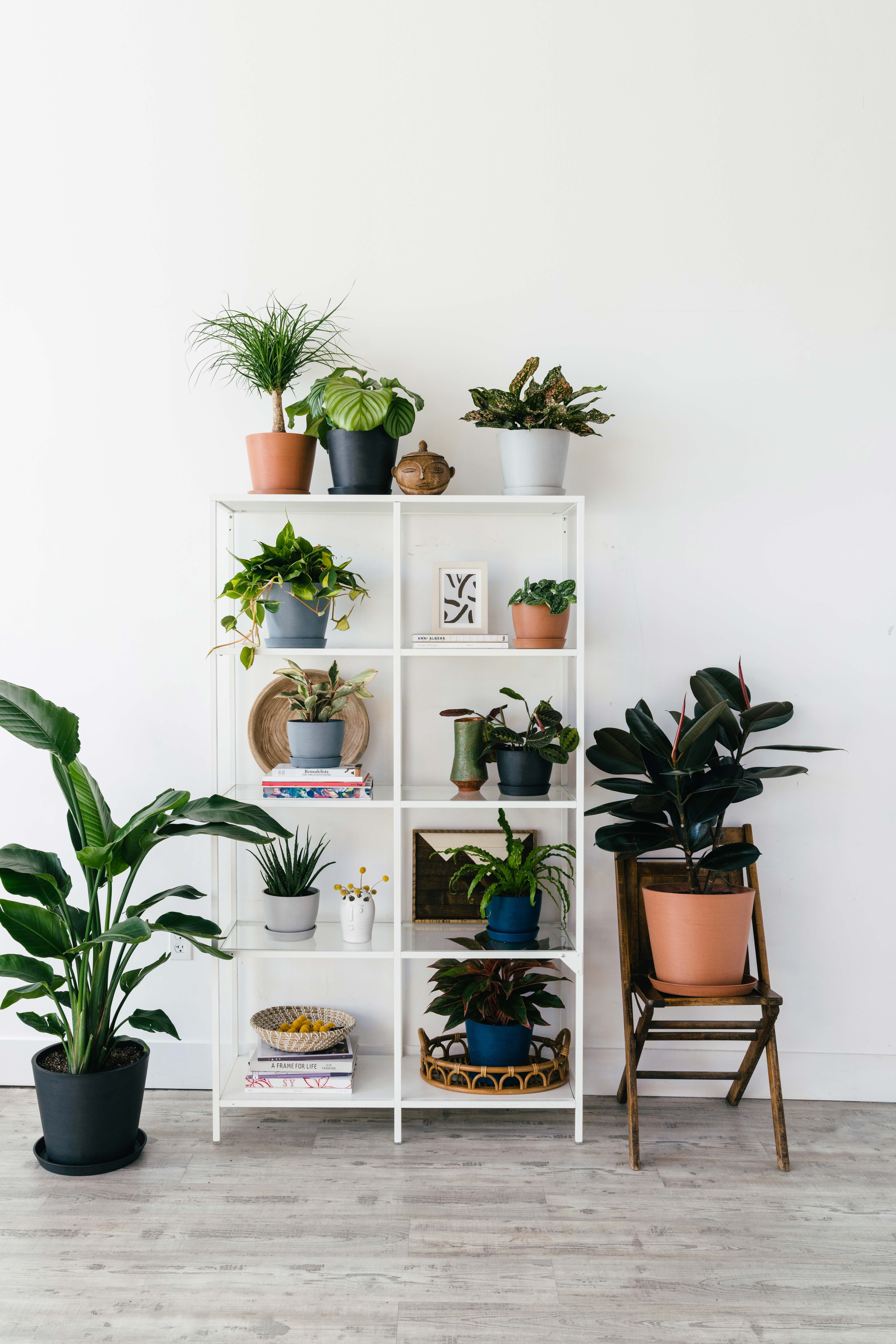 5 Signs Your Houseplant Is Dying, and How to Reverse Them