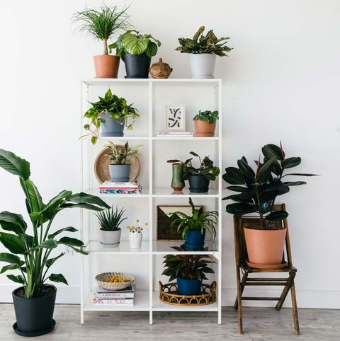 How to Revive a Dying Houseplant - How to Bring a Nearly ... Green Spots On House Plants on green house lamps, green potted plants, green medicinal plants, living room plants, types of plants, green leafy houseplants, green house cars, indoor plants, green shade gardens, green plants for shade, green house trees, green arrow plants, green climbing plants, green house in hands, green leaf plants, green house space, green lady plant, green foliage plants, green plants names, green gift plants,