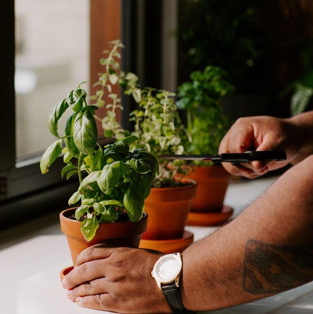 person cutting herbs