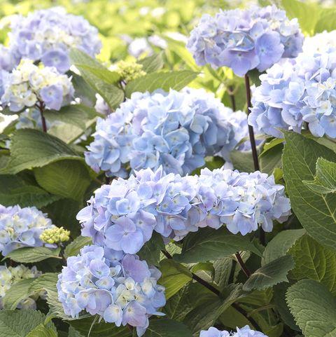 30 Best Summer Flowers Beautiful Flowers That Bloom All Summer