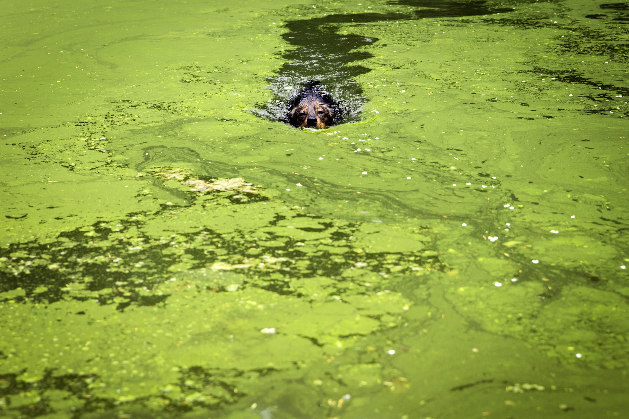 Blue-Green Algae in Lakes Is Killing Dogs—Here's What You Should Know