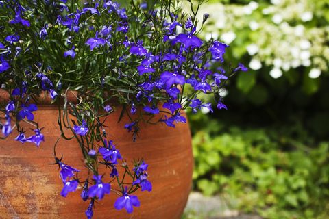 9 common gardening mistakes we all make