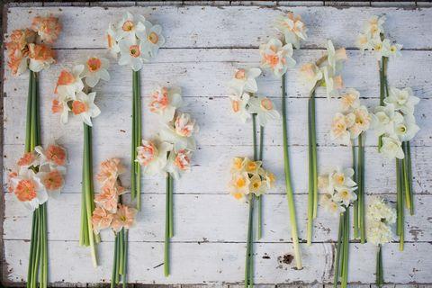 Wall, Yellow, Plant, Flower, Floral design, Leaf, Wildflower, Still life, Wood, Amaryllis family,