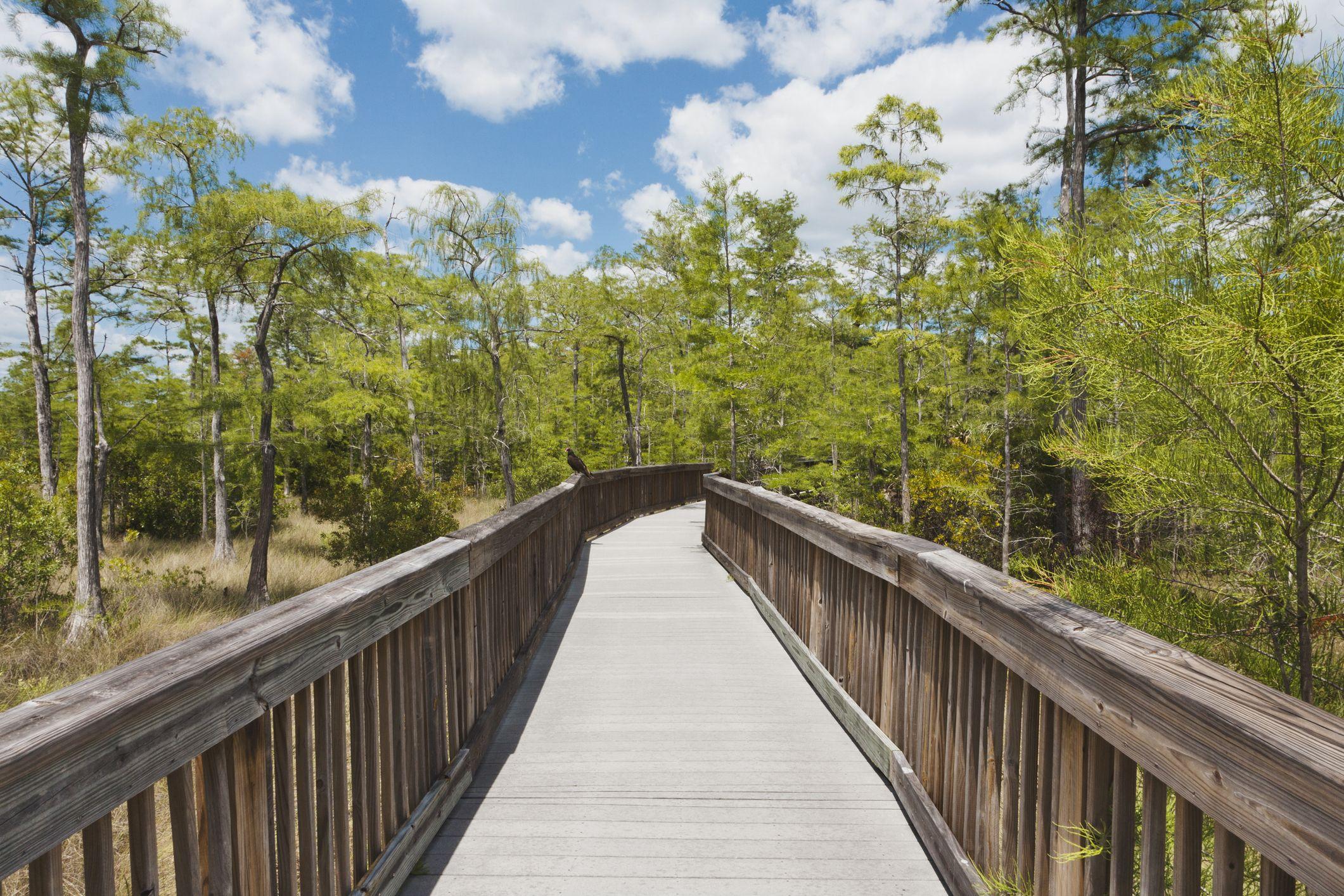 Boardwalk through the Everglades