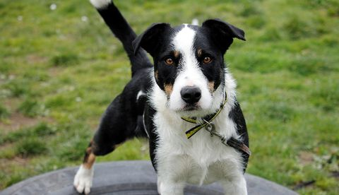 UPDATED: The Dog's Trust is looking for forever homes for 14 Collies