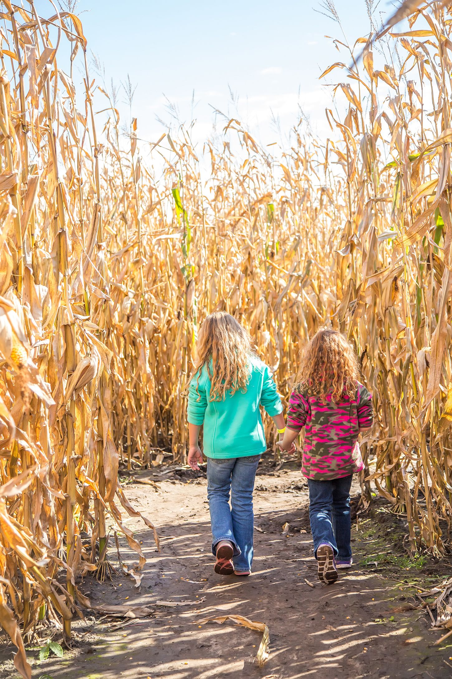 bob's corn maze snohomish washington
