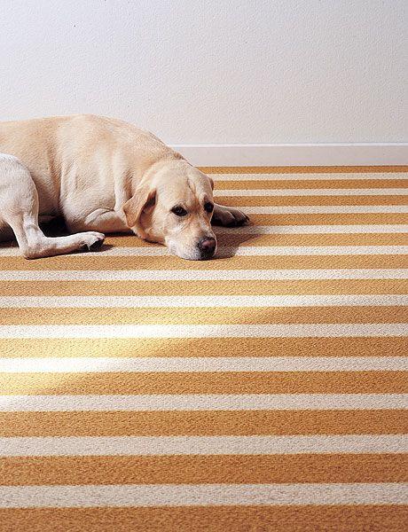 Dog, Canidae, Dog breed, Floor, Carnivore, Sporting Group, Snout, Flooring, Labrador retriever, Retriever,