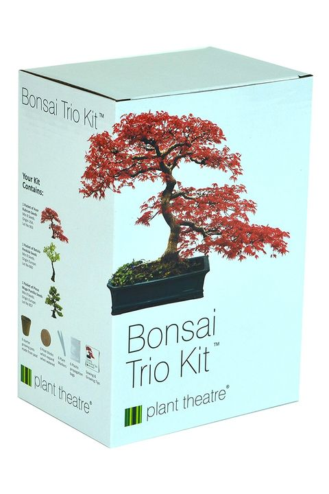 Bonsai Trio Kit