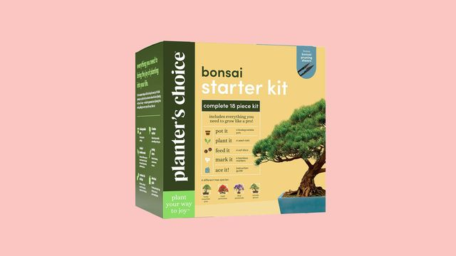 Amazon Is Selling A Bonsai Tree Starter Kit For 25 Bestselling Bonsai Tree Starter Kit