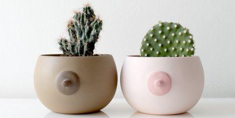 Flowerpot, White, Cactus, Houseplant, Ceramic, Egg cup, Plant, Succulent plant, Serveware, Tableware,