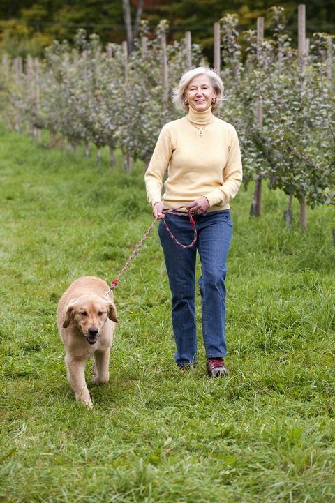 boomer walking dog in apple orchard