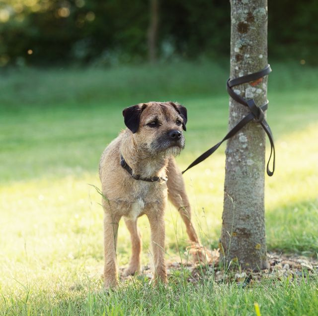 world's first dog dna database will tackle rising dog theft