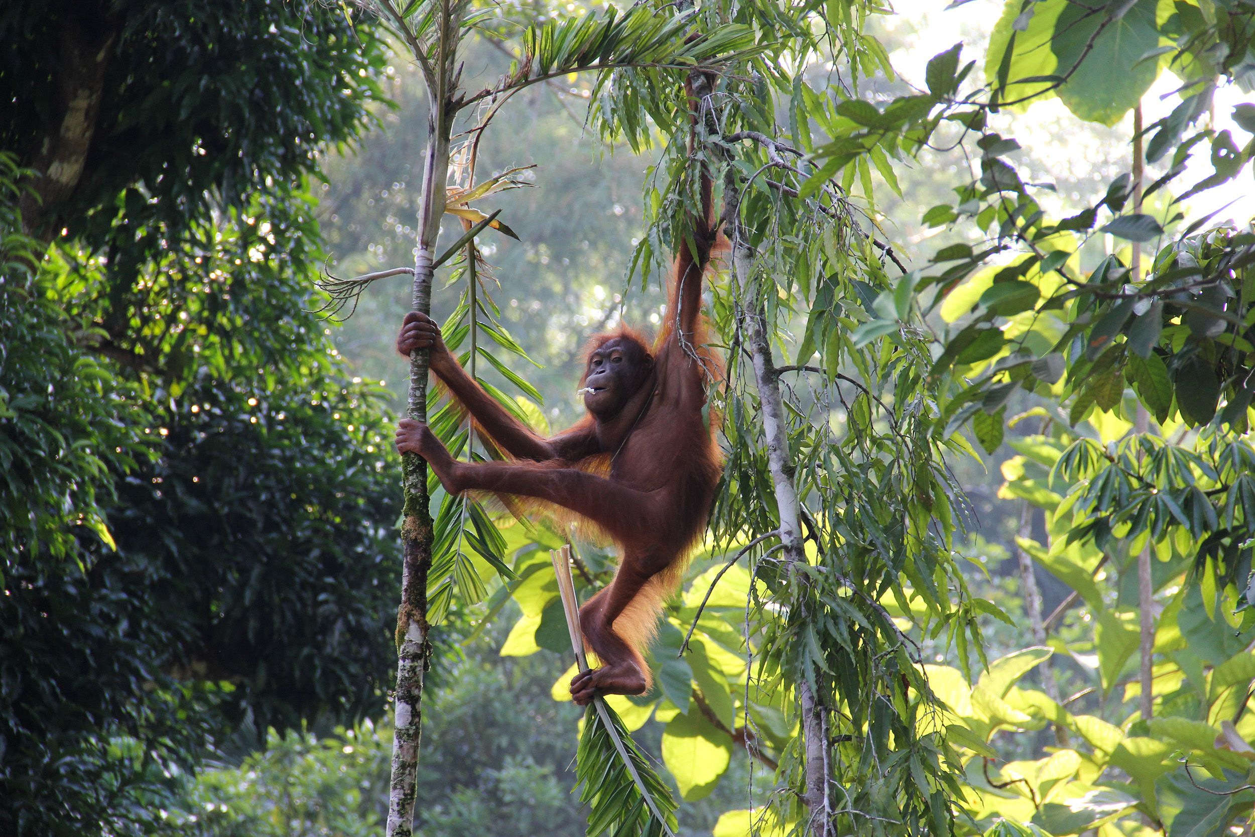 Borneo Tours: These photos show why Borneo offers the wildlife holiday of a lifetime