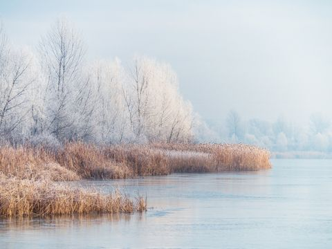 frosty morning landscape on the pond with trees and plants covered with hoarfrost