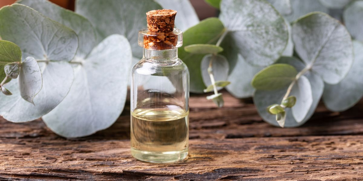 7 Genius Ways Eucalyptus Oil Can Benefit Your Health, According to Experts