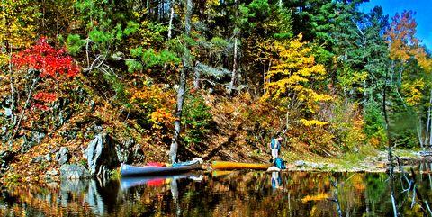 Reflection, Nature, Tree, Leaf, Natural landscape, Water, Vegetation, Natural environment, Wilderness, Nature reserve,