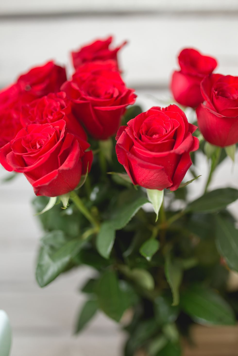 Rosas rojas - significados de flores