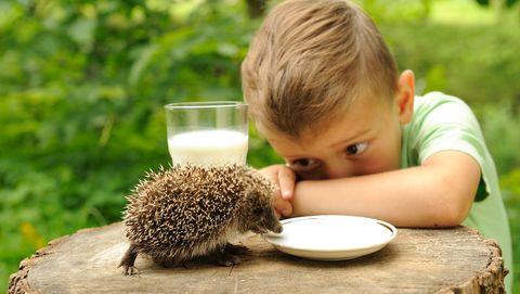 egel drinkt melk