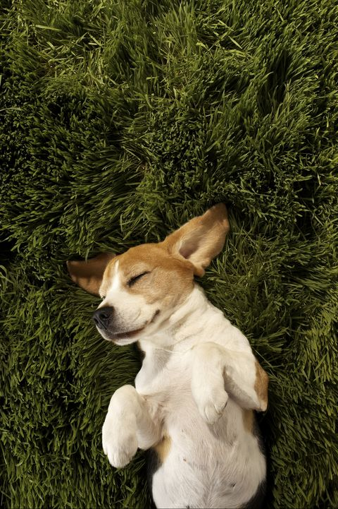 boy dog names archie