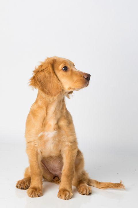 boy dog names pluto