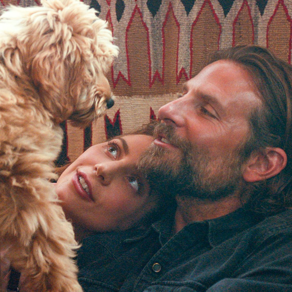 Image result for the dog from a star is born