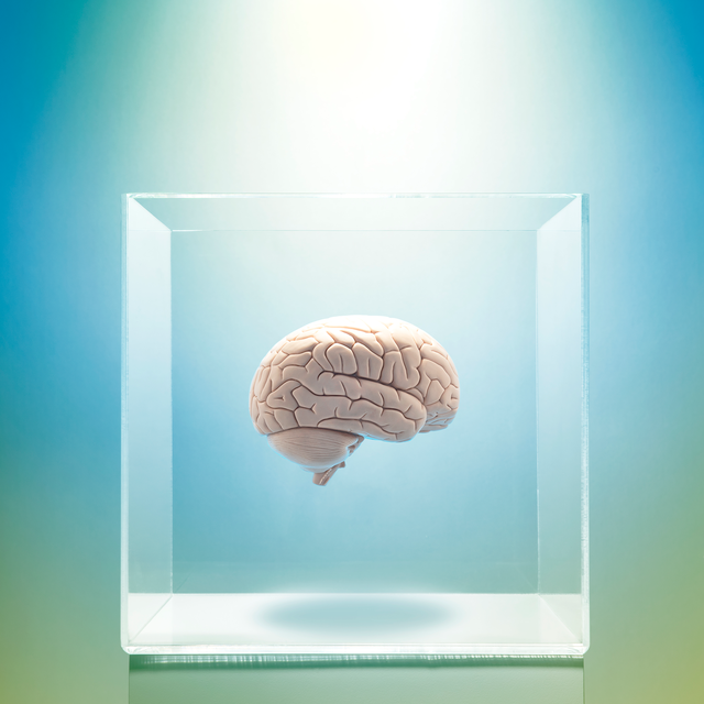 brain in box