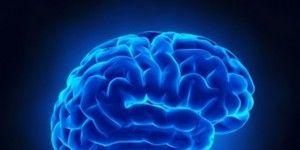 brain-research-300x239.jpg