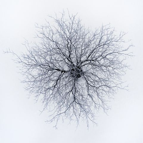 Tree, White, Branch, Twig, Woody plant, Plant, Line, Black-and-white, Sky, Winter,