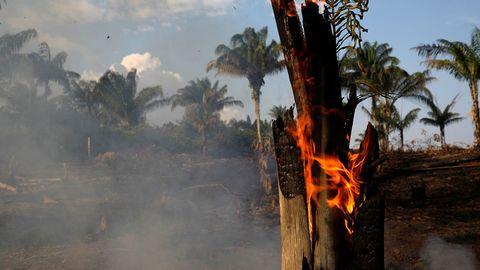 Wildfire, Vegetation, Heat, Fire, Tree, Flame, Geological phenomenon,